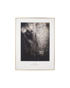 Mono Elephant Print with Gold Detail and Black Frame