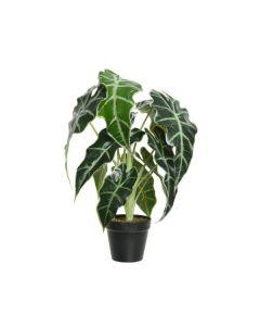 Alocasia Artificial Plant in Pot