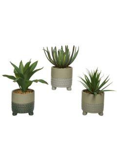 Set of 3 Succulent Plants