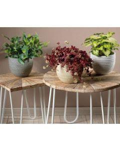 Set of 3 Terracotta Planters